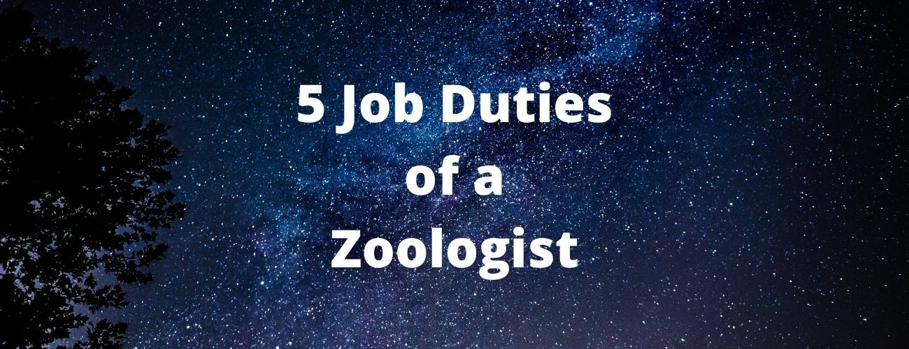 Job Duties of a Zoologist